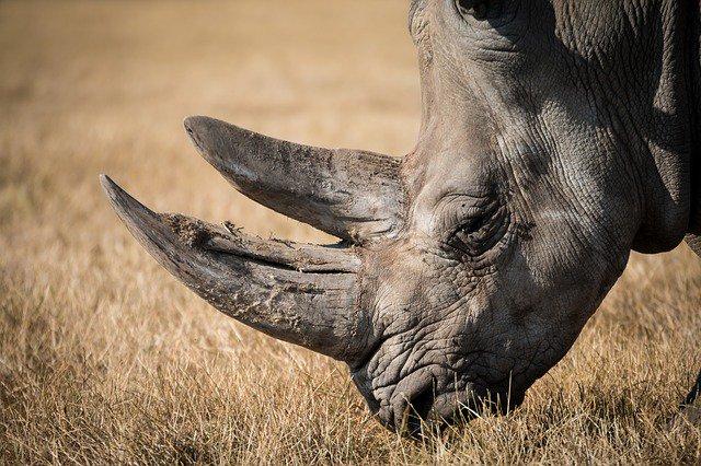 rhino-charity-home